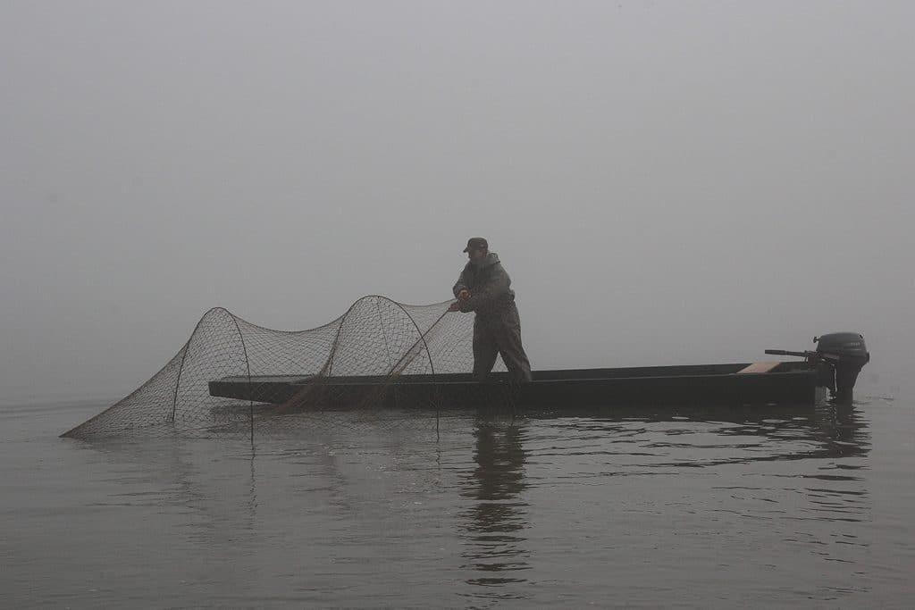 Idén is terveznek szelektív célú halászatot a Tisza-tavon