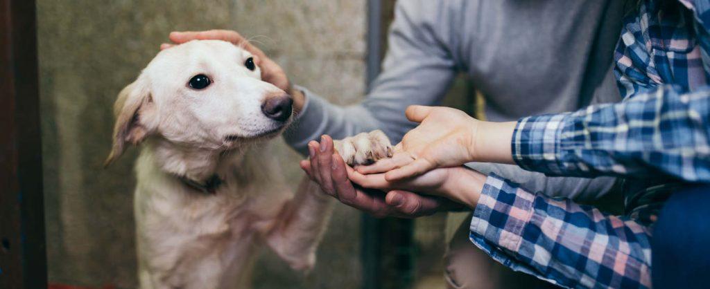 A kutya nyakából csak műtéttel lehetett eltávolítani a láncot