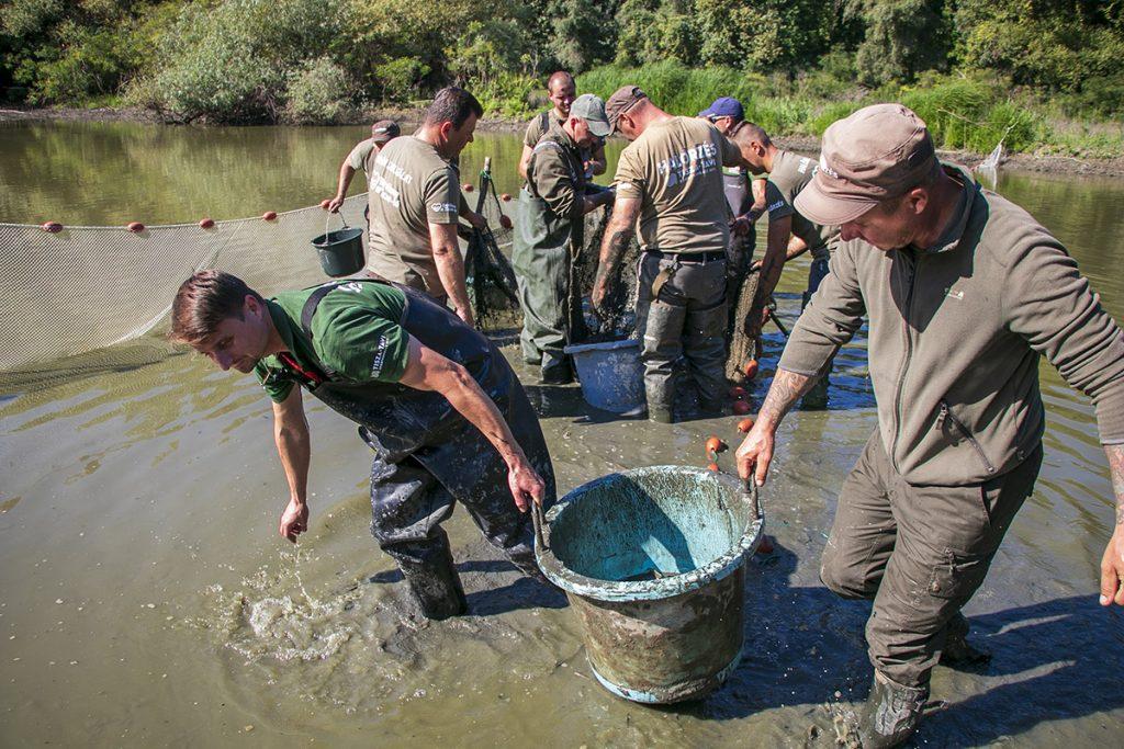Halmentés a Tisza-tavon